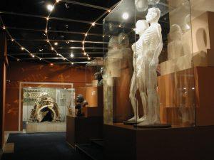 Красноярский краевой краеведческий музей, зал археологии и антропологии